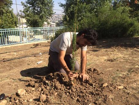 Urban Tree Planting Brightens Israeli Cities/Bonnie Riva Rass