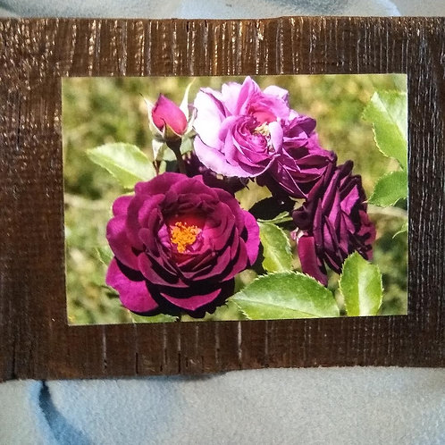 Rustic barn wood with Purple roses photograph
