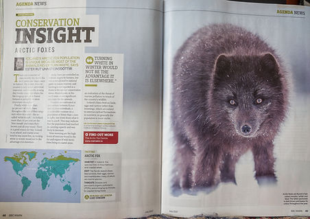 arctic-fox-bbc.jpg