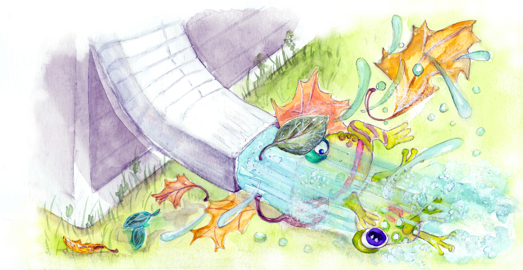 frog travelogue