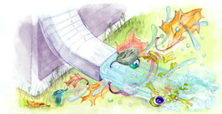frog travelogue