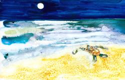 cecilia's journey to the sea