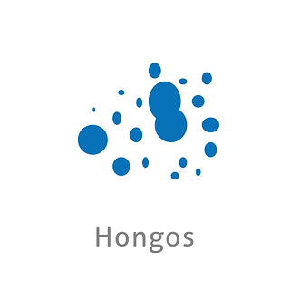 HONGOS.png