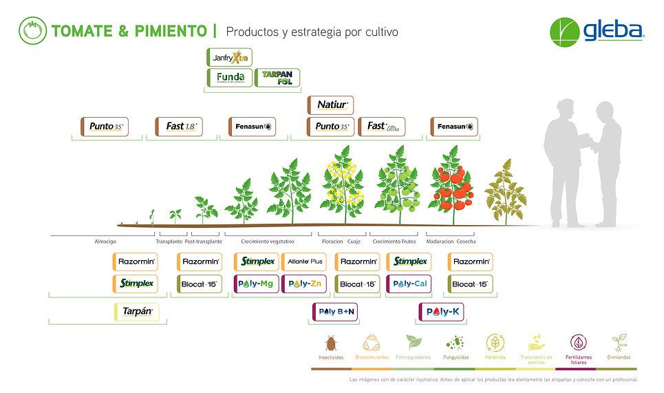 GL-Fenologias_1960x1160-Tomate&Pimiento-