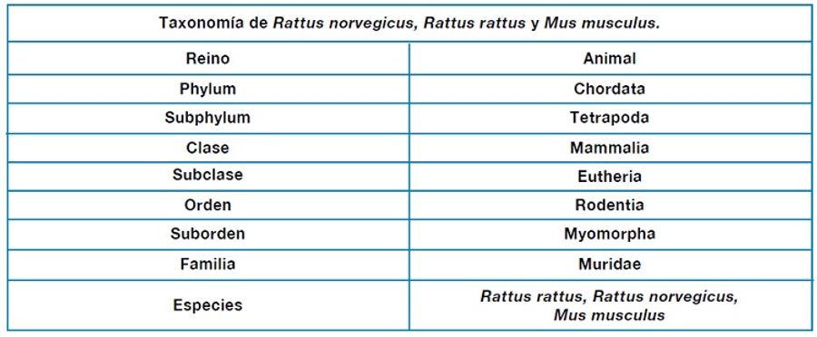 Taxonomia Rattus Gleba.jpg