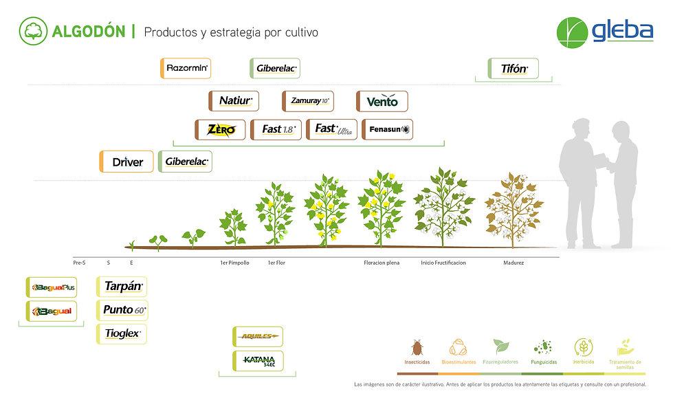 ALGODON - Estrategia x Cultivo 2020.jpg
