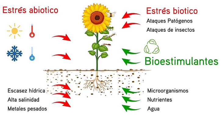 bioestimulantes grafico.jpg