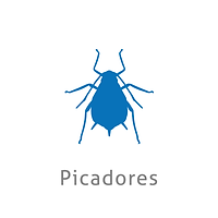 picadoresok.png