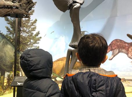 Dinossáurios no Museu