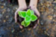 seedling 1.jpg