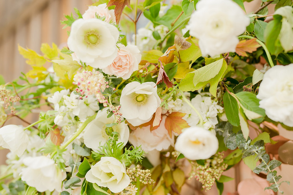 Spring white and blush flowers anemones,