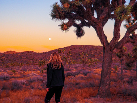Have Your Cake at Joshua Tree National Park