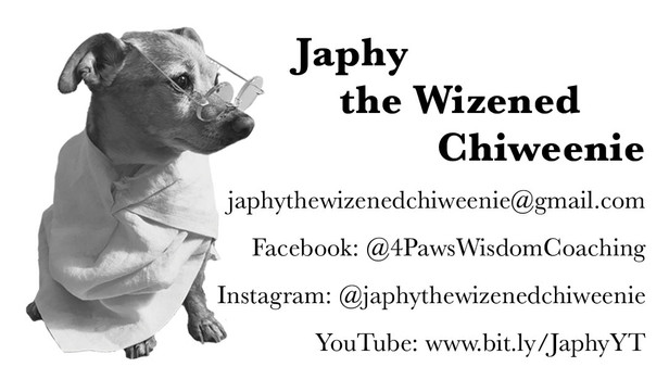 BUSINESS CARD: JAPHY THE WIZENED CHIWEENIE