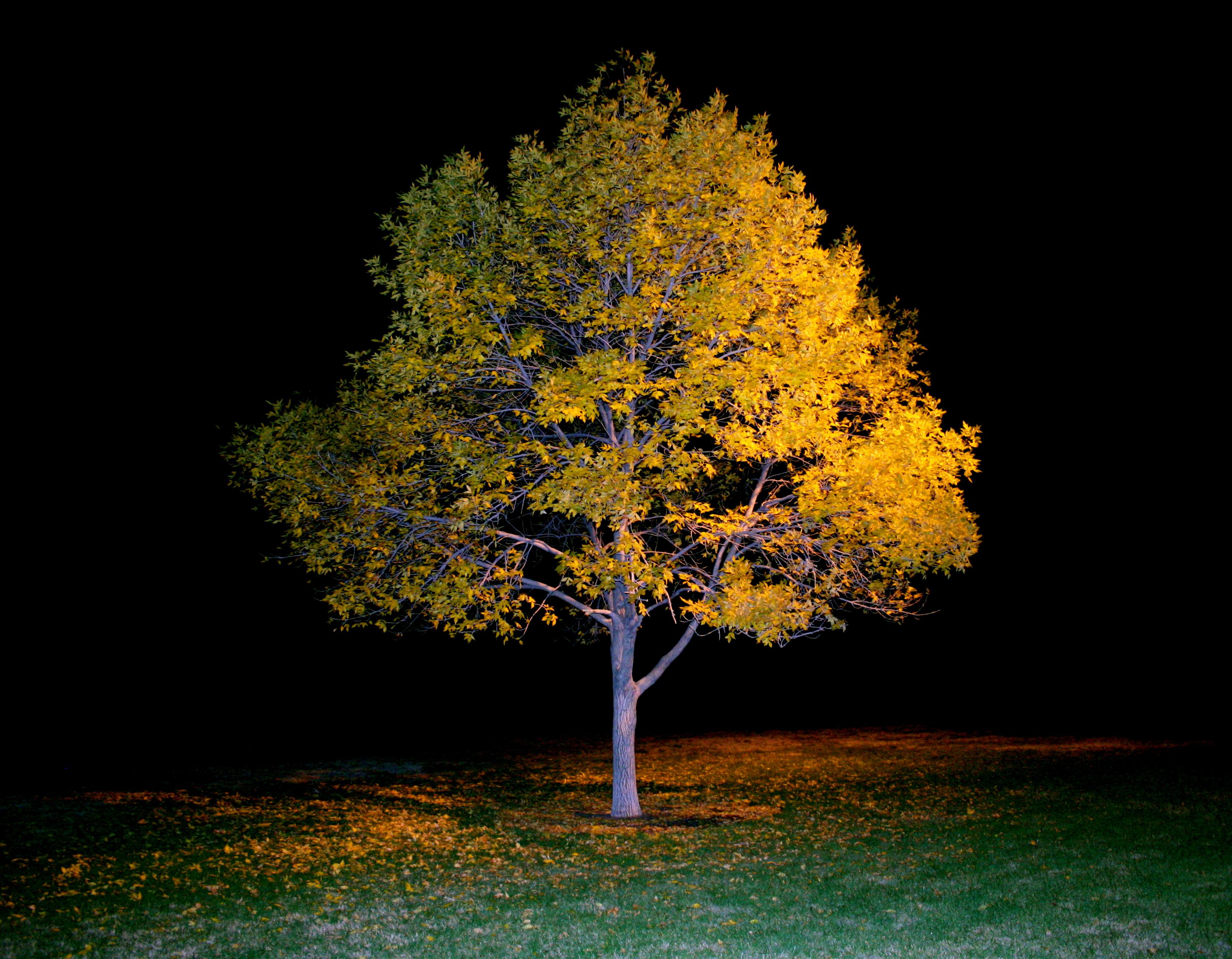 Night Tree.jpg