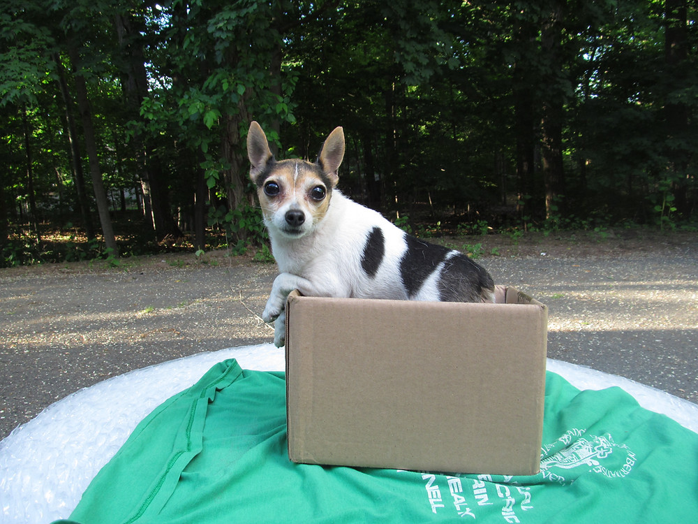 Toy Fox Terrier 360 Degree Moving