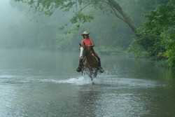 Misty Mornin Ride