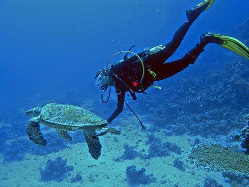Dykning med havskildpade