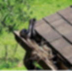 Snake in gutter 2.jpg
