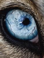 eye dog3.png