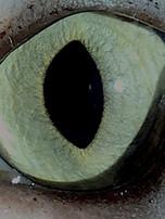 M.Left Eye 2.JPG