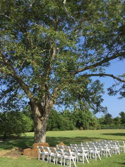 Carolyn's Tree