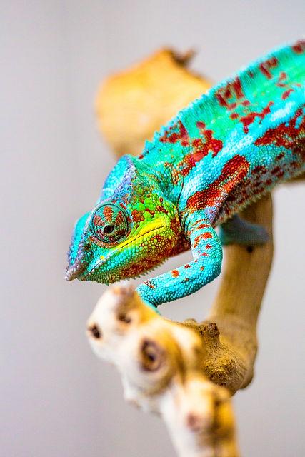lizards4.jpg