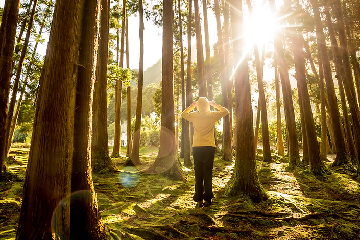 Sunny forest with person.png