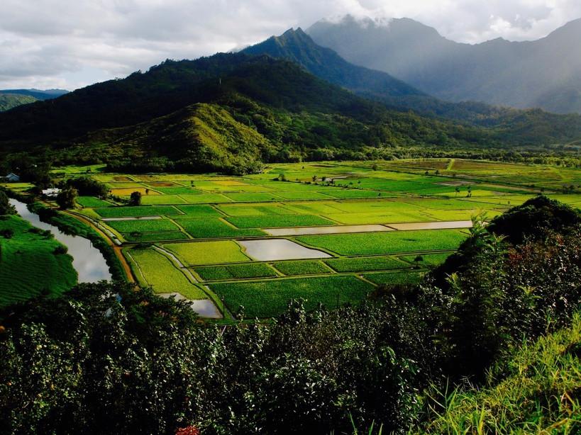 Kaua'i, Hawaii (1).jpg