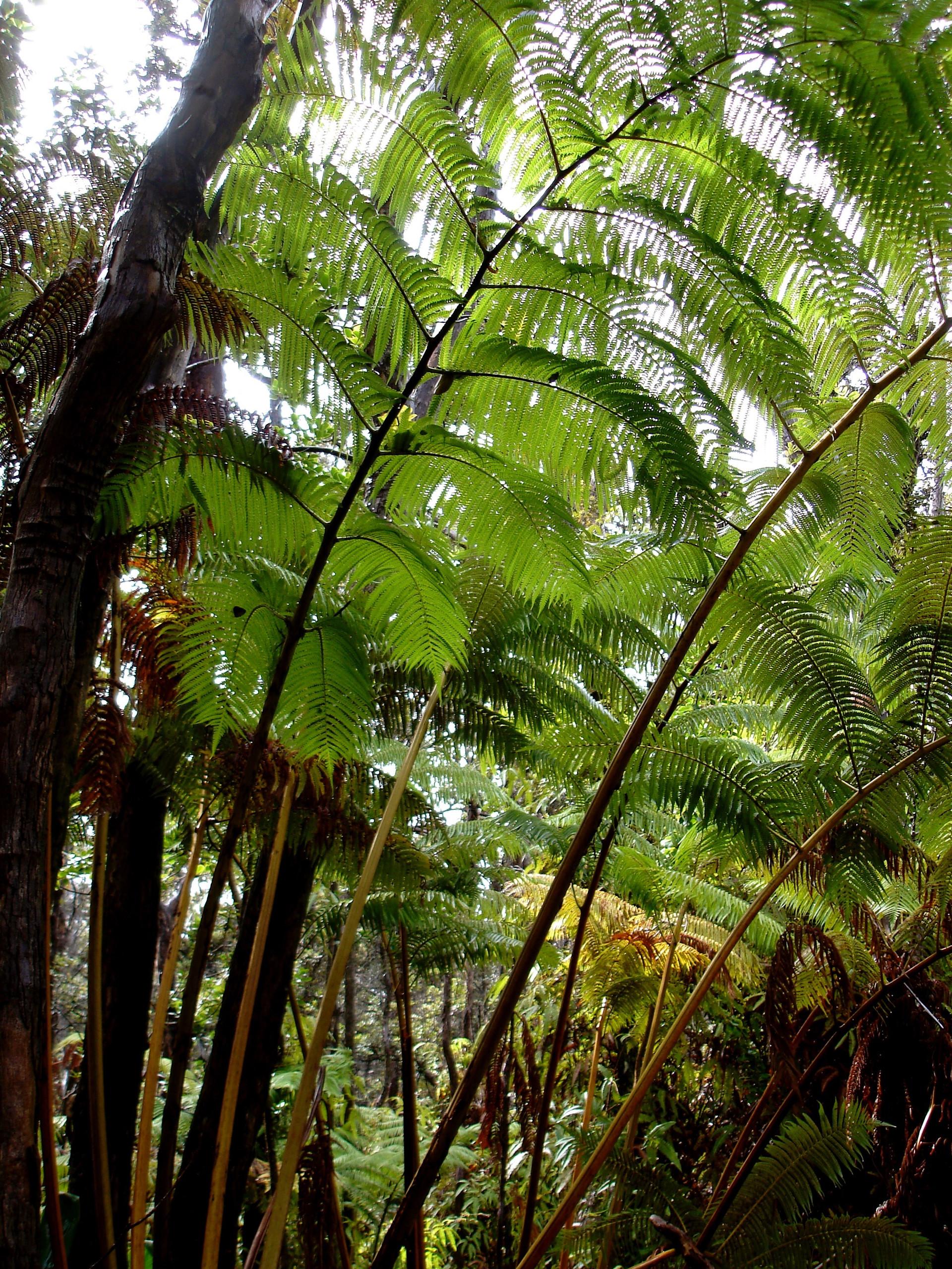 The Big Island, Hawaii (2).jpg