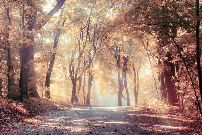 Autumn trees in sunbeams, an autumn land