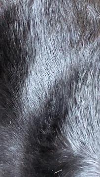 dog hair .png