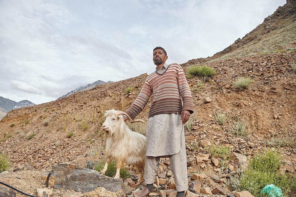 pashmina goat shepherd