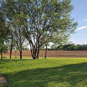 Tree Area in Side Yard