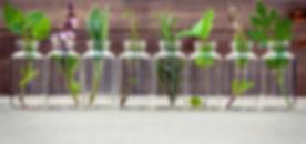 herbs-in-jars.jpg