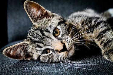 kat gedragsadvies