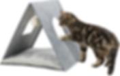 schuilplek kitten.PNG