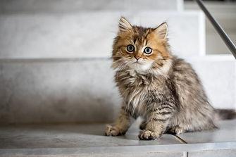 kitten gedragsadvies