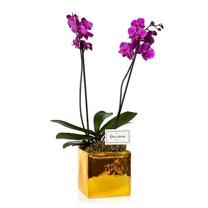 Maceta con Orquídeas