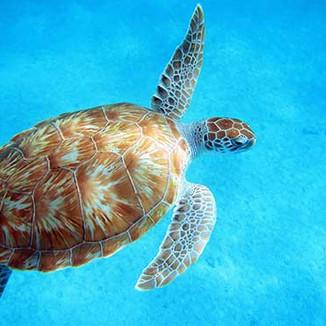 MCB-Turtle.jpg