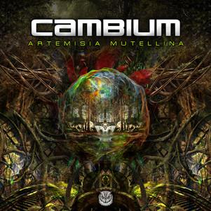 Cambium - Artemisia Mutellina