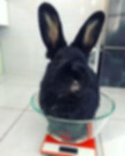 królik ważony na wadze kuchennej