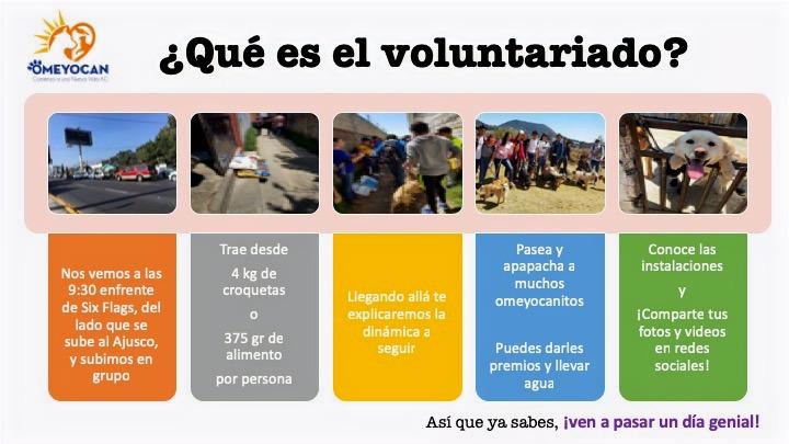 De_que%C3%8C%C2%81_trata_voluntariado_ed