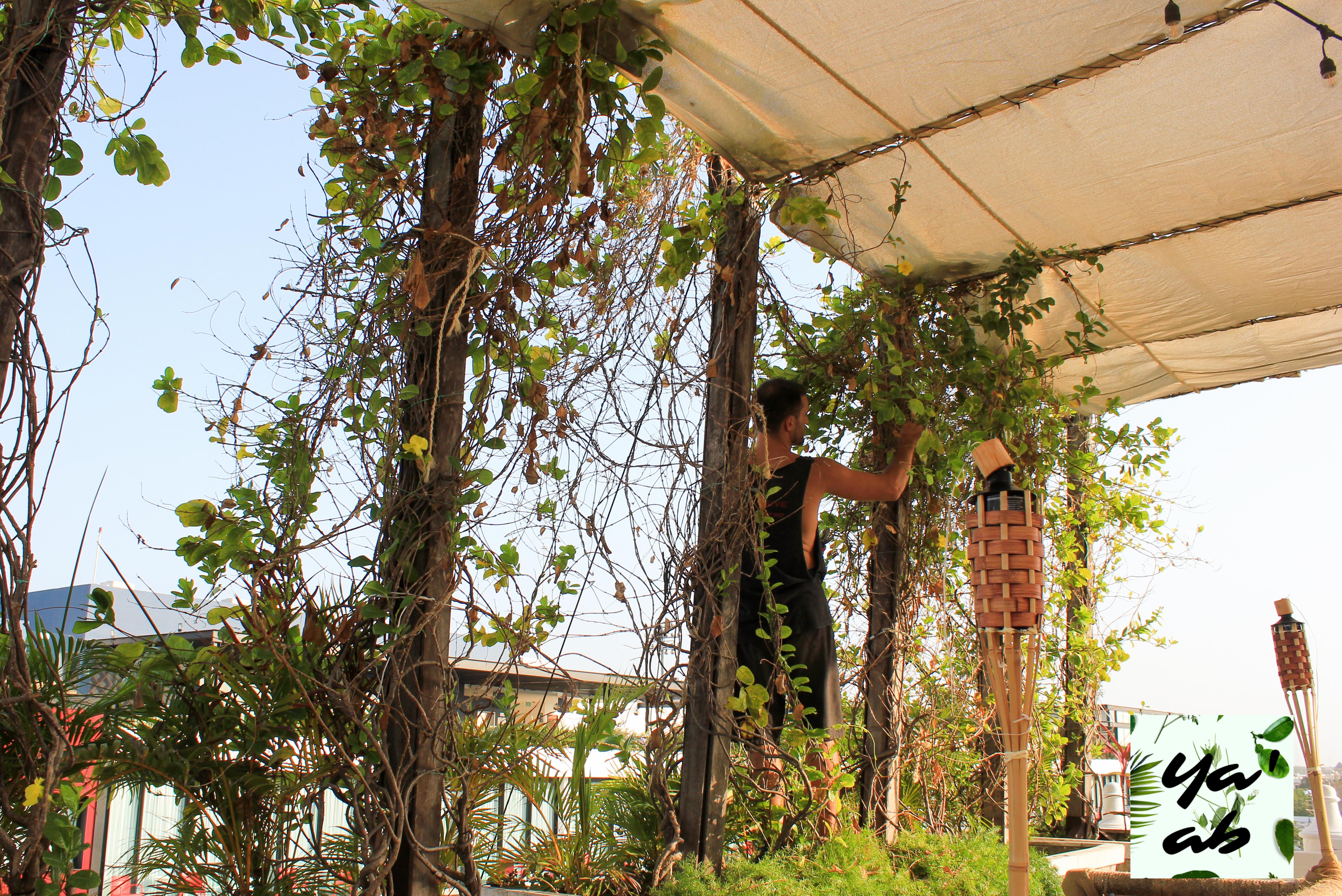 Mantenimiento de terrazas y patios