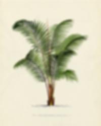 venta de plantas en playa del carmen