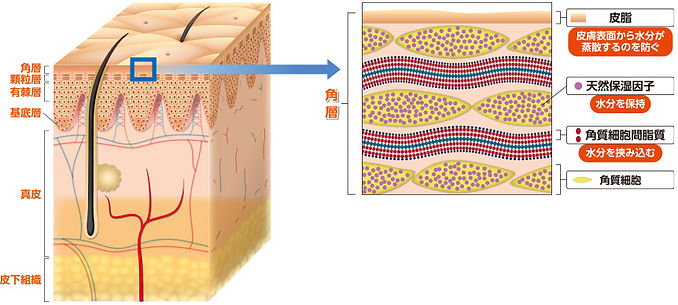 skin-baria.jpg