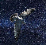 oiseau_bleu-2 - Carré.jpg