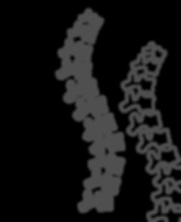 kissclipart-spine-symbol-clipart-vertebr