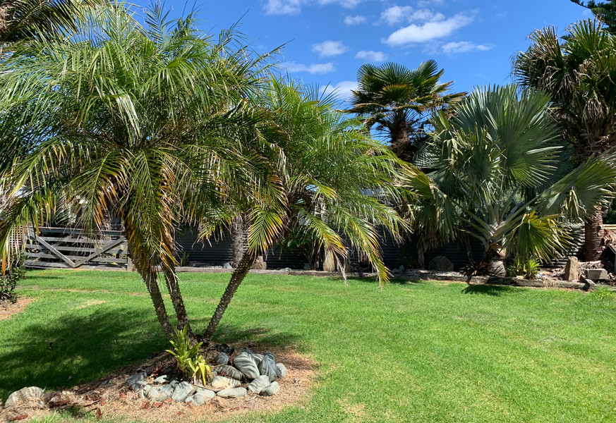 Tropical palms taupo bay reference 41