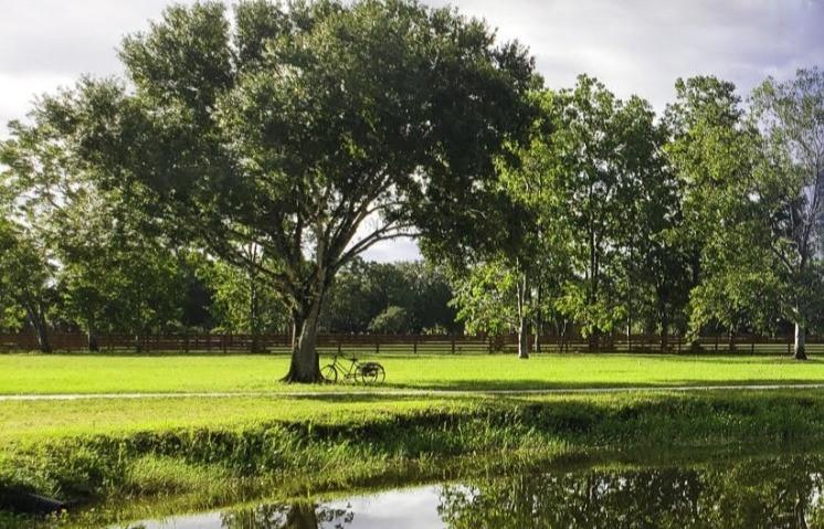Buck's Lakeside