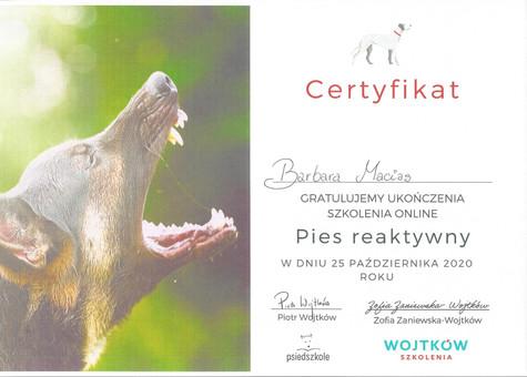 certyfikat pies reaktywny.jpg